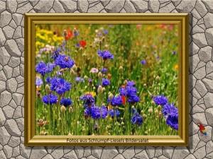 Blumenmix