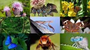 Insekten 8