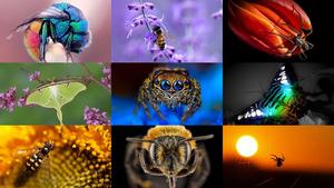 Insekten 7