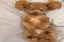 Hund kann nicht einschlafen
