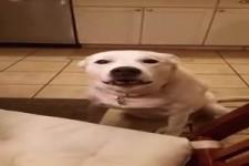 Der sprechende Hund