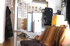 Die Torwart-Katze