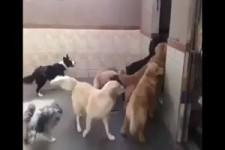 Hunde Dressur