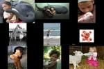 Kinder-und-Tiere1.pps auf www.funpot.net