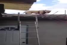 VIDEO - Komm vom Dach herunter