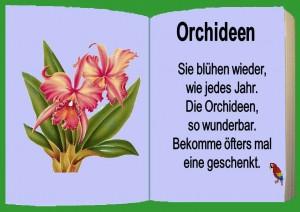 Orchideen 6