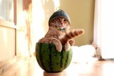 Der Melonen-Chef