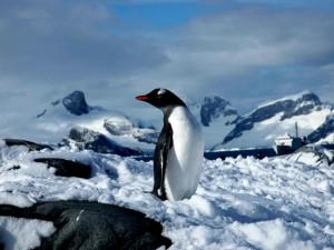 Antarctica Petermann Island