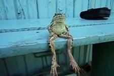 Chillender Frosch