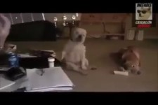 Hund rockt ab