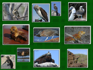 Galapagos Inseln Fauna & Flora