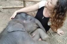 Elefantenbaby schlaeft ruhig