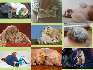 Wenn Tiere träumen