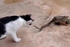 Tiere unter sich