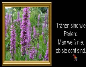 Blumen mit Spruechen 27