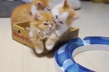 Niedliche Katzen-Babys