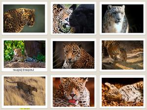 Leopard-Jaguar 2 (Tiere)