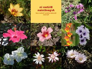 Blüten in Argentinien
