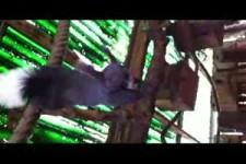 Eichhörnchen-gib mir eine Nuss