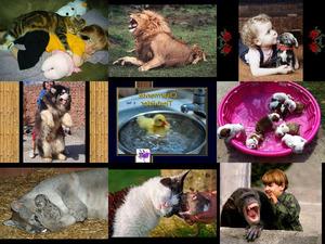 Charmante Tierbilder Teil 2