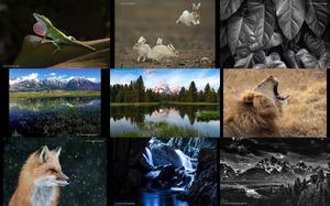 Großer Foto-Wettbewerb im Freien - Gewinner und Finalisten