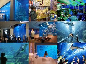 Dubais Aquarien