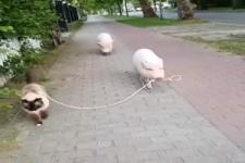 Schoener Spaziergang