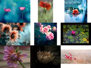 Des Fleurs ... - Blumen
