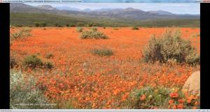 South Africa National Parks - Südafrika - Nationalparks