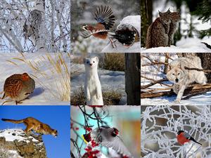 Winter Wood Pals - Winter-Holz-Kumpel Tiere