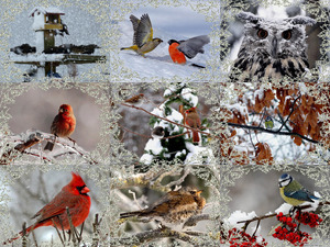 Winter Birdies 1 - Winter-Vögel 1
