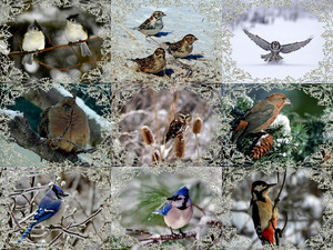 Winter Birdies 2 - Winter-Vögel 2