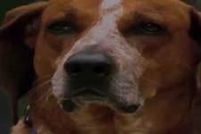 Was ein Hundefreund nie vergessen darf