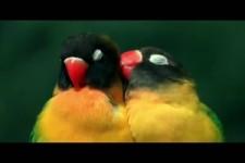 Papageien Liebe und Treue