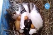 Katze hat alle Babys lieb