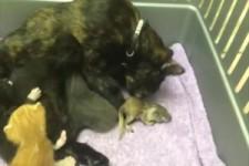 Mama Katze mit Eichhörnchen baby