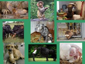Schöne Tiergeschichten