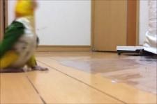 Der - Papageien- Marsch