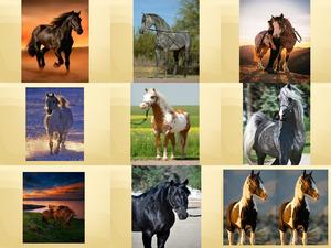 Beautiful Pferde