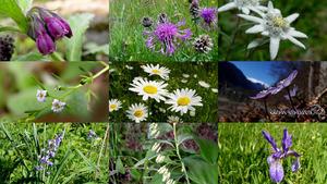 Tenderness - Zärtlichkeit - Blumen