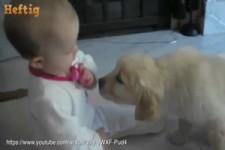 Warum jedes Baby einen Hund haben sollte