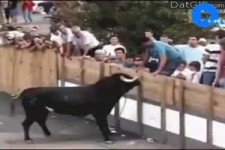 So geht es, wenn man Tiere ärgert