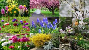 L' arrivée du printemps - Die Ankunft des Frühlings
