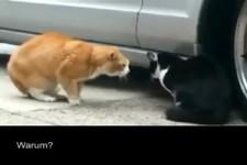 Katzen-Streit