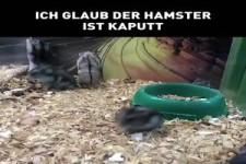 Ich glaub der Hamster ist kaputt