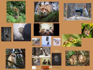 Emotional Wildlife Photos - Emotionale Wildnis Fotos