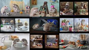 From the life of Hedgehogs - Aus dem Leben der Igel