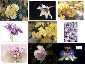 Art De La Photo - Les Fleurs - Art of Foto - Blumen