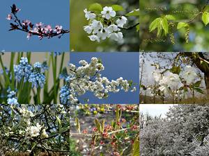 Springtime - Frühling