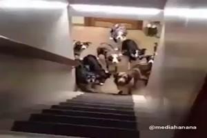 Gelehrige Hunde